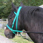b bitless bridles