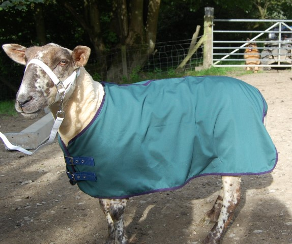 Show Coats Sheep Wear